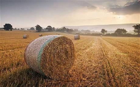 L'UE mette a disposizione ulteriori 500 milioni di euro per gli agricoltori europei