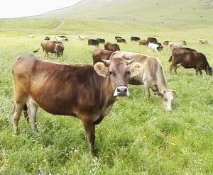 scheme_funding_in_livestock+breeding_sector