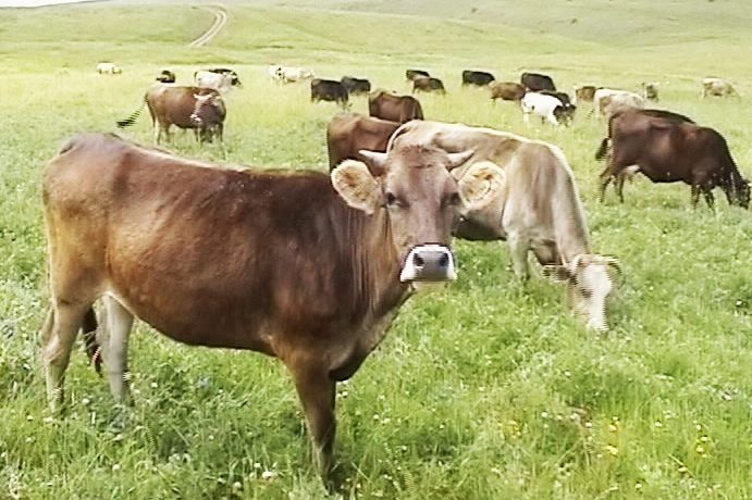 Payment schemes to support the livestock sector begins