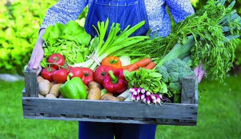 """Pubblicata la misura 4.1 - """"Investimenti nelle aziende agricole"""" - del PSR 2014-2020"""